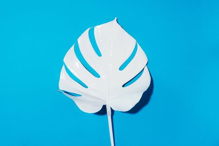 White painted monstera tropical leaf on blue background. Summer minimal concept 스톡 콘텐츠