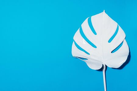 Summer composition. White tropical palm leaves on blue background. Summer concept. Flat lay, top view, copy space.