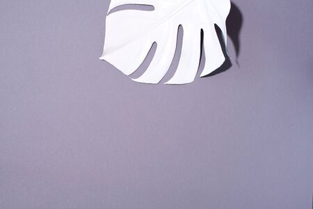 White painted monstera tropical leaf on grey background. Summer minimal concept 스톡 콘텐츠