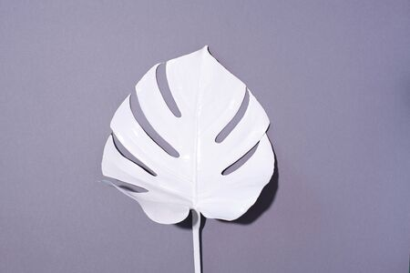 Summer composition. White tropical palm leaves on grey background. Summer concept. Flat lay, top view, copy space.