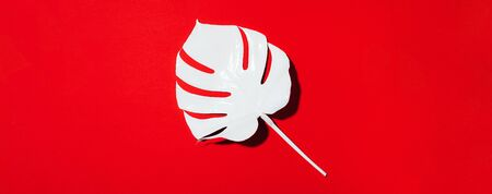 White painted monstera tropical leaf on red background. Summer minimal concept. 스톡 콘텐츠