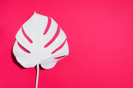 White painted monstera tropical leaf on pink background. Summer minimal concept.