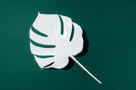 White painted monstera tropical leaf on green background. Summer minimal concept. 스톡 콘텐츠
