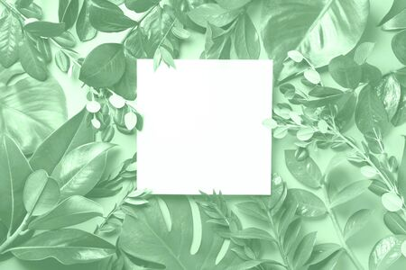 Creative layout made of tropical leaves in trendy neo mint color. Flat lay. Top view. Mock up. Banco de Imagens