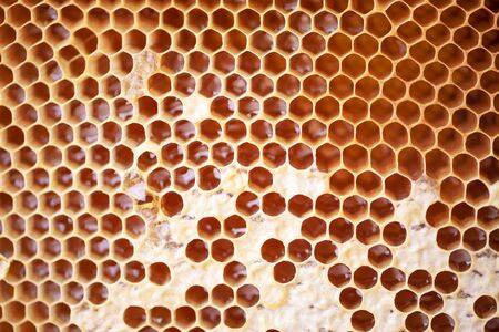 Wooden frame with honeycomb full of honey. Close up background for design. Macro. Honey beehive. Imagens