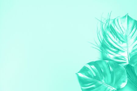 Exotic summer trend in minimal style. Golden tropical palm monstera leaf on mint color background. Shiny and sparkle design, fashion concept. Trendy green and turquoise color Banco de Imagens