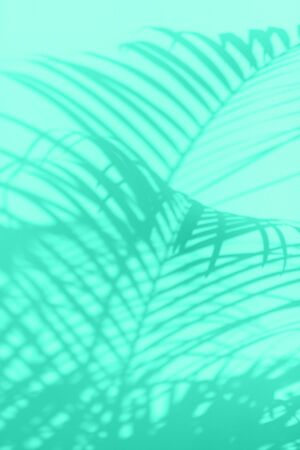 Summer travel concept. Shadow of exotic palm leaves is laying on mint color background. Banner with copy space. Biscay Green color of the year 2020 Reklamní fotografie