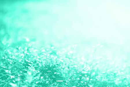 Abstract natural background with light bokeh and leaks effect. Grass in forest. Summer concept in mint color. Trendy green and turquoise color. Copy space. Banner. Soft focus Reklamní fotografie