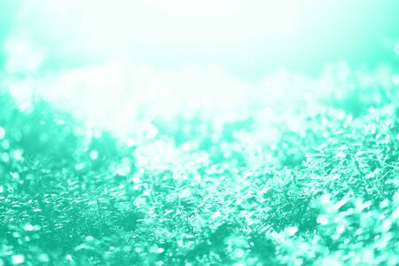Blur leaves with bokeh, abstract background in mint color. Banner. Wild nature. Biscay Green color of the year 2020