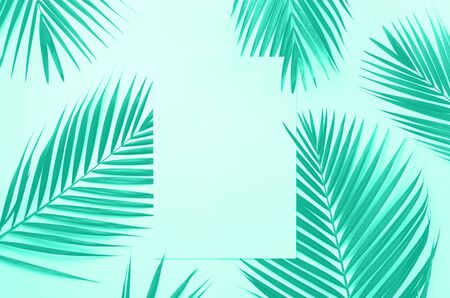 Tropical palm leaves on mint color background with paper card note. Trendy green and turquoise color. Minimal summer concept. Creative layout. Top view, flat lay Reklamní fotografie