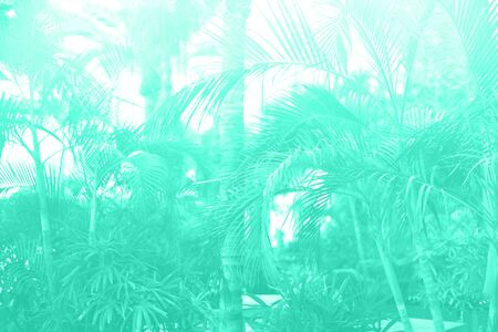 Tropical palm leaves with sun leaks effect. Floral pattern in mint color background. Trendy green and turquoise color. Exotic palms bokeh, toned. Summer, holiday and travel concept.