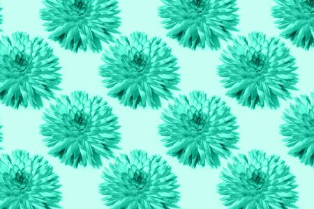 Floral pattern. Top view. Floral texture. Flat lay with mint dahlia flowers on turquoise background. Greeting card. Biscay Green color of the year 2020 Stock Photo