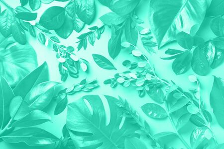 Creative layout made of tropical leaves in mint color. Trendy green and turquoise color. Flat lay. Top view. Mock up.