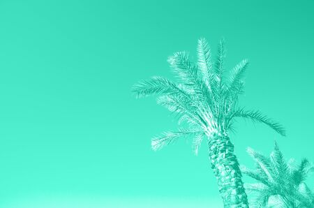 Palms with colorful pop art effect. Vintage stylized photo with light leaks. Summer palm trees over mint color sky. Copy space. Biscay Green color of the year 2020