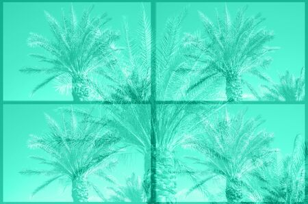Trendy mint color colored palm trees on sky background. Fantastic toned photo light leaks. Tropical, exotic vacation. Trendy green and turquoise color. Creative banner. Summer travel concept