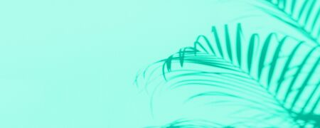 Summer travel concept. Shadow of exotic palm leaves is laying on mint color background. Banner with copy space. Biscay Green color of the year 2020 Stock fotó