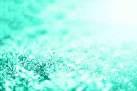 Abstract natural background with light bokeh and leaks effect. Grass in forest. Summer concept in mint color. Trendy green and turquoise color. Copy space. Banner. Soft focus Stock fotó