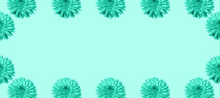 Floral pattern made of mint flowers over turquoise background. Festive spring and summer frame background. Trendy green and turquoise color. Pattern of bloom dahlias. Floral texture. Banner. Reklamní fotografie