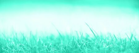 Fresh green spring grass with sun leaks effect, copy space. Soft Focus. Abstract nature in mint color background.Trendy green and turquoise color. Banner.