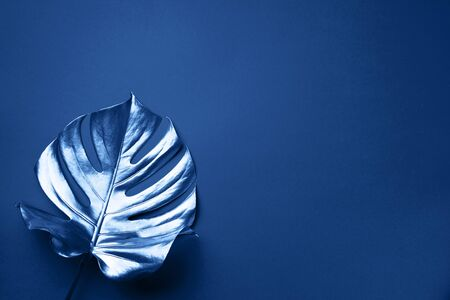 Exotic summer trend in minimal style. Tropical palm monstera leaf on classic blue color background. Shiny and sparkle design, fashion concept Banco de Imagens - 135185922