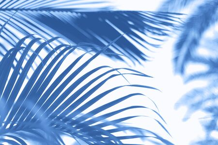 Palms with colorful pop art effect. Vintage stylized photo with light leaks. Summer palm trees over monochrome color sky. Copy space. Trendy classic blue background Banco de Imagens