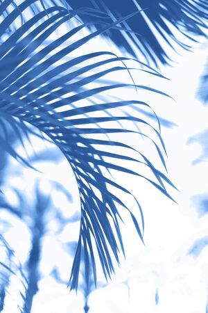Palms with colorful pop art effect. Vintage stylized photo with light leaks. Summer palm trees over monochrome color sky. Copy space. Trendy classic blue background 写真素材
