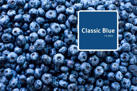 Fresh blueberries background with copy space for your text. Border design. Vegan and vegetarian concept. Macro texture of blueberry berries. Summer healthy food.