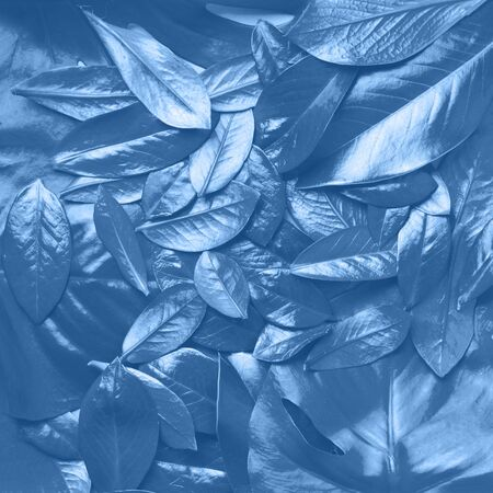 Creative layout made of tropical leaves in monochrome color. Trendy blue and calm color. Flat lay. Top view. Mock up. Banco de Imagens - 135186664