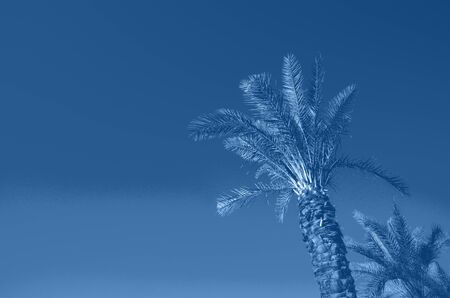 Summer travel concept. Shadow of exotic palm leaves is laying on monochrome color background. Banner with copy space. Trendy blue and calm color Banco de Imagens - 135187126