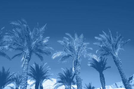 Tropical palm trees over monochrome color sky. Summer and travel concept. Holiday background. Trendy blue and calm color. Palm leaves and branches texture with copy space. Banner Banco de Imagens - 135187122