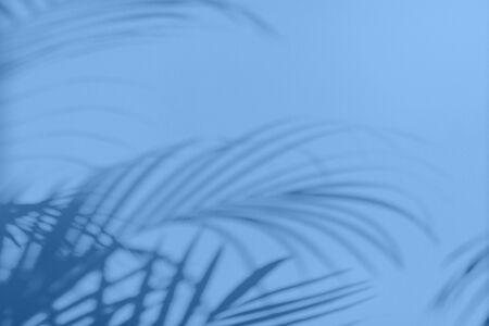 Summer travel concept. Shadow of exotic palm leaves is laying on monochrome color background. Banner with copy space. Trendy blue and calm color