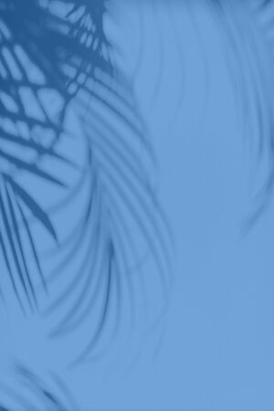 Summer travel concept. Shadow of exotic palm leaves is laying on monochrome color background. Banner with copy space. Trendy blue and calm color Banco de Imagens - 135187169