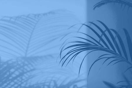 Summer travel concept. Shadow of exotic palm leaves is laying on monochrome color background. Banner with copy space. Trendy blue and calm color Banco de Imagens - 135187198