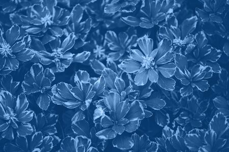 Green leaves texture. Trendy blue and calm color. Tropical leaf in monochrome color background. Banner. Top view.