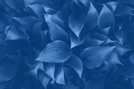 Nature concept. Top view. Green leaves texture in monochrome color. Trendy blue and calm color. Tropical leaf background