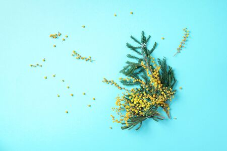 Spring mimosa flowers on blue background. Top view. Copy space. Spring concept. Floral composition, creative layout.