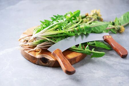 Dandelion fresh leaves for liver detox salad on gray background. Copy space. Naturopathy concept, herbal holistic medicine, alternative approach. Low fat diet