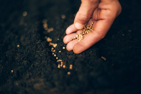 Hand growing seeds on sowing soil. Background with copy space. Agriculture, organic gardening, planting or ecology concept. Sustainable business investment. Gospel spreading.