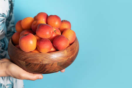 Woman hands holding wooden bowl of apricot on blue background. Banner with copy space. Fruit summer concept. Bowl of harvested apricots for jam