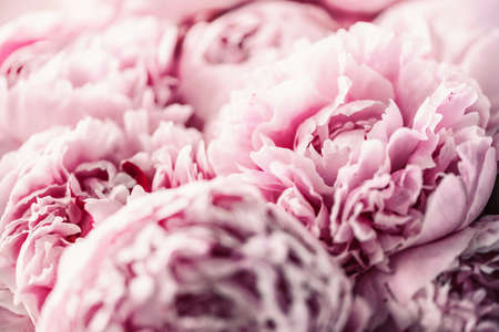 Pink peony flower on pastel background. Copy space. Floral composition. Wedding, birthday, anniversary bouquet. Woman day, Mothers day. Macro of peonies flowers