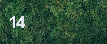 Ecology, zero waste. Green grass, digit fourteen. Birthday greeting card with inscription 14. Anniversary concept. Banner. Top view. Copy space. White numeral on eco moss background. Numerical digit