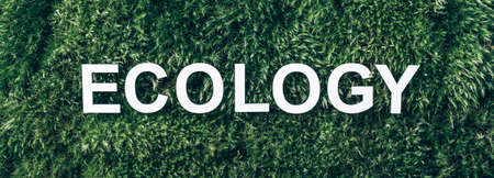 Word Ecology on moss, green grass background. Top view. Copy space. Banner. Biophilia concept. Nature backdrop Stockfoto