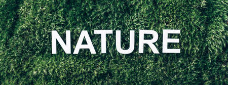 Word Nature on moss, green grass background. Top view. Copy space. Banner. Biophilia concept. Nature backdrop