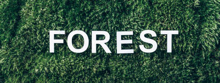 Word Forest on moss, green grass background. Top view. Copy space. Banner. Biophilia concept. Nature backdrop Stockfoto