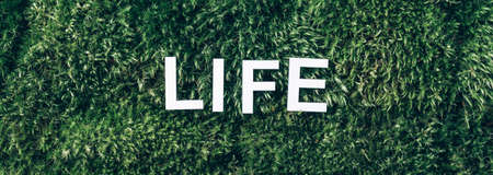 Word Life on moss, green grass background. Top view. Copy space. Banner. Biophilia concept. Nature backdrop