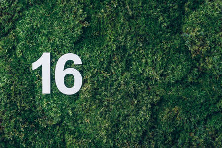 Ecology, zero waste. Green grass, digit sixteen. Birthday greeting card with inscription 16. Anniversary concept. Top view. Copy space. White numeral on eco moss background. Numerical digit