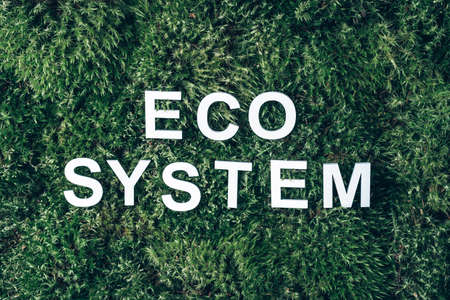 Word ecosystem on moss, green grass background. Top view. Copy space. Banner. Biophilia concept. Nature backdrop