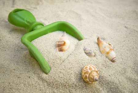 Sand and Shells photo