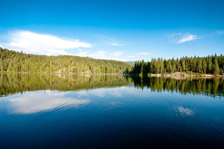 Green Sequioa Trees and Their Reflection on Calm Lake photo