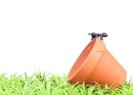 Fake Ant Insect on Clay Pot in the Grass photo
